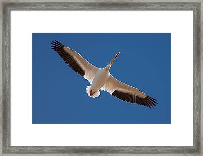 Framed Print featuring the photograph Wings Are Spread by Monte Stevens