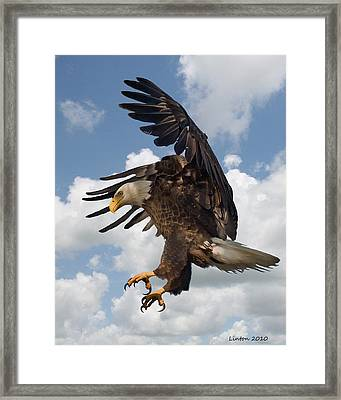 Wings Beak And Talons Framed Print by Larry Linton