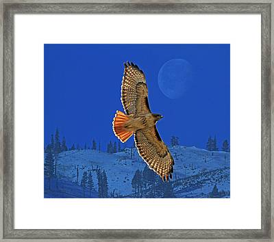 Wings Framed Print by Donna Kennedy