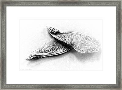 Wings II Framed Print by Arne Hansen