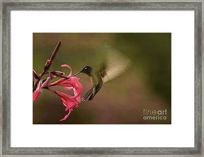 Framed Print featuring the photograph Wings In Motion 3 by Anne Rodkin