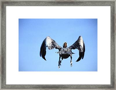 Wings In Position And Flaps Down Framed Print by Carl Purcell