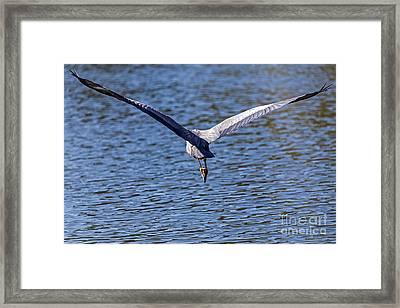 Wings Framed Print by Kate Brown