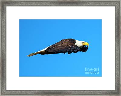 Wings Framed Print by Mike Dawson