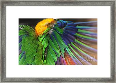 Wings Of A Conure Framed Print