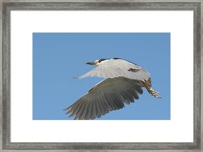 Wings Of Fancy Framed Print by Fraida Gutovich