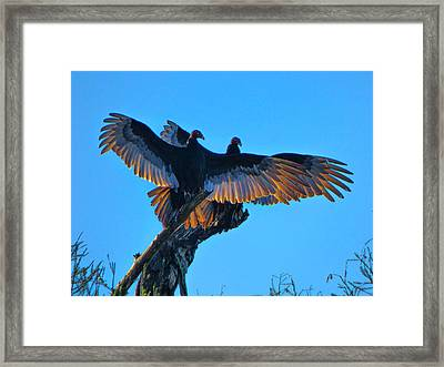 Wings Of Gold Framed Print by Kimo Fernandez
