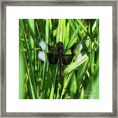 Framed Print featuring the photograph Wings Of Note by Deborah Johnson