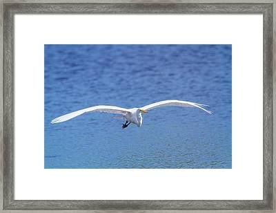 Wings Of The Great White Framed Print