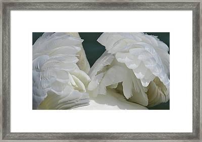 Wings Of White Framed Print