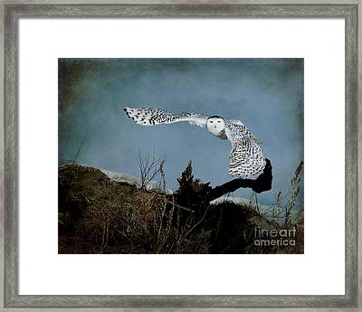 Wings Of Winter Framed Print by Heather King