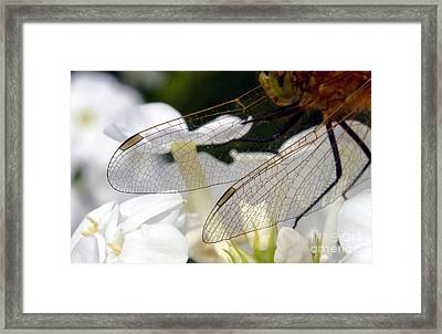 Wings On A Dragon Framed Print