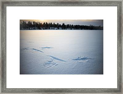 Wings On The Mississippi Near Rice Mn Framed Print