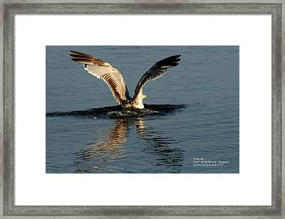 Wings On The Sea Framed Print