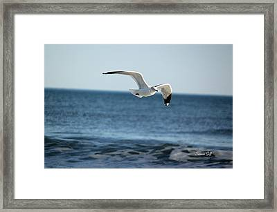 Wings Over The Water Framed Print