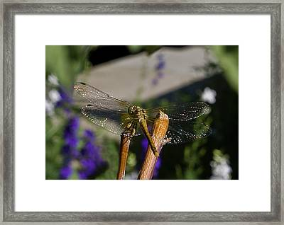 Wings Sparkling In The Sun Framed Print by ShaddowCat Arts - Sherry