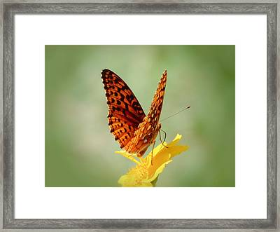 Wings Up - Butterfly Framed Print