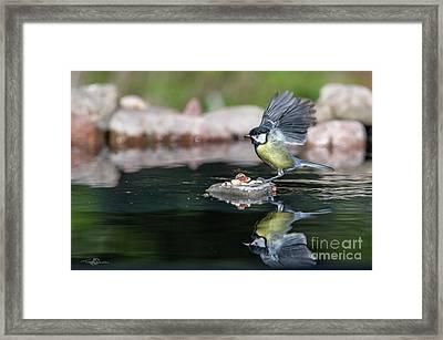 Wings Up Framed Print