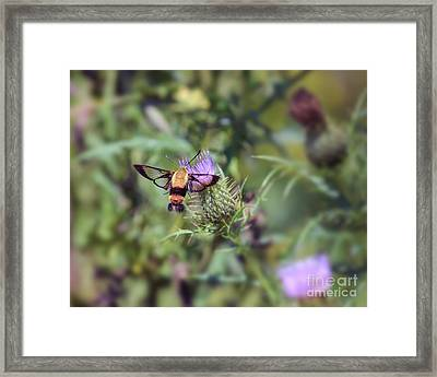 Wings You Can See Through Framed Print