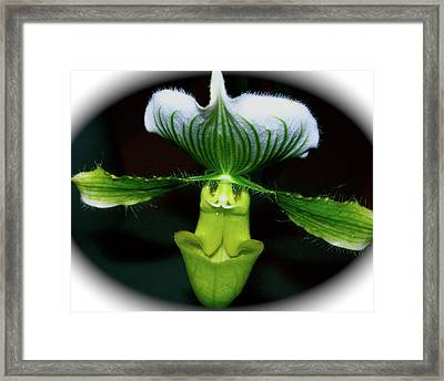 Wingspan Orchid Framed Print