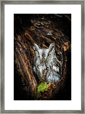 Wink, Wink Framed Print by Tracy Munson