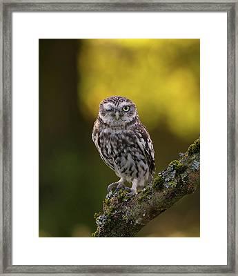 Winking Little Owl Framed Print