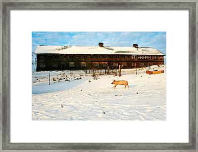 Winnie At Heartland Farm Sanctuary Framed Print