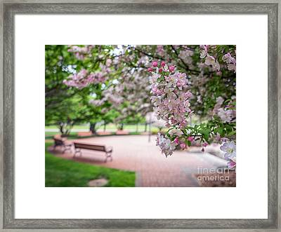 Winona Veterans Memorial With Blossoms Framed Print