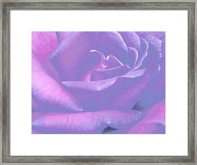 Winsome Rose 1 Framed Print
