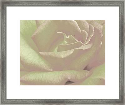 Winsome Rose 2 Framed Print