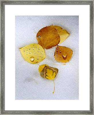 Winter And Fall Collide Framed Print