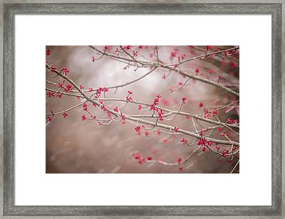 Framed Print featuring the photograph Winter And Spring by Terry DeLuco