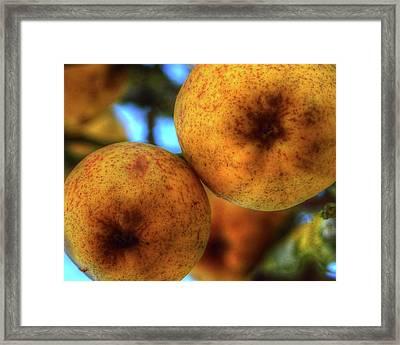 Winter Apples 2 Framed Print
