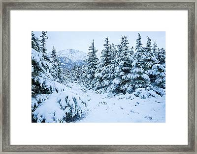 Winter Arrives Framed Print