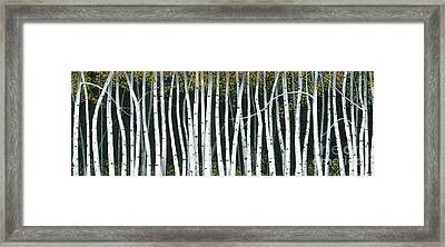 Framed Print featuring the painting Winter Aspen 3 by Michael Swanson