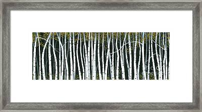 Winter Aspen 3 Framed Print