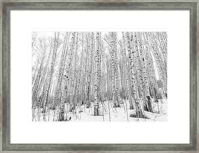 Winter Aspens Framed Print by Eric Glaser