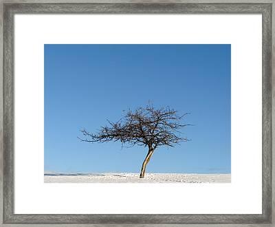 Winter At The Crabapple Tree Framed Print