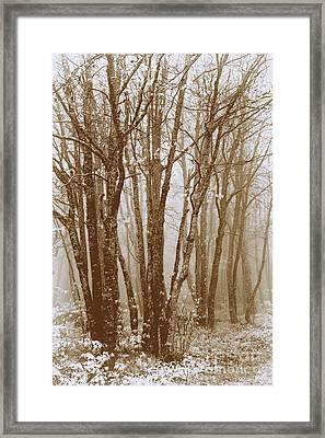Winter Bare Trees In A Spring Fog Se Framed Print