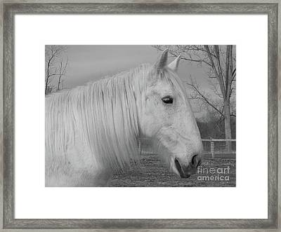 Winter Beauty Framed Print by Ann Horn