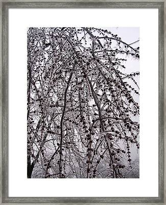 Winter Beauty Framed Print by Audrey Venute