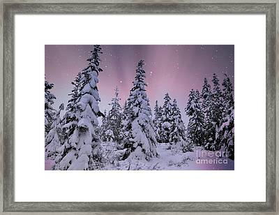 Winter Beauty Framed Print by Sheila Ping
