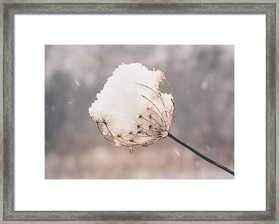 Framed Print featuring the photograph Winter Beauty by Viviana  Nadowski