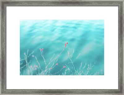 Winter Berries Framed Print by Lisa McStamp