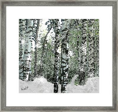 Winter Birches Framed Print