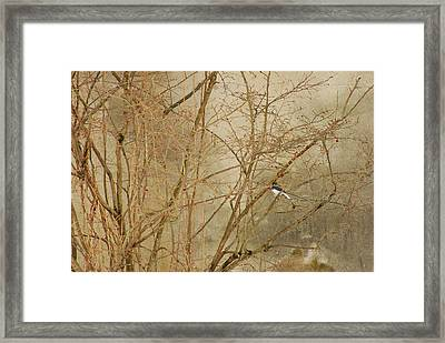 Winter Bird At The Audubon Framed Print