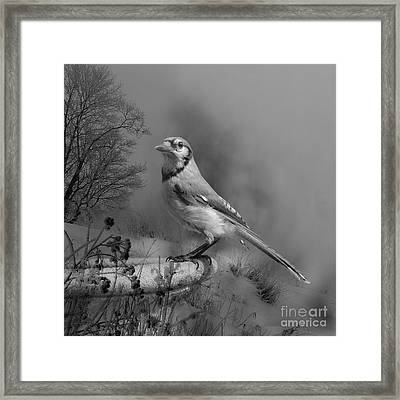 Winter Bird Framed Print by Jan Piller