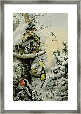 Winter Bird Table With Blue Tits Framed Print by Carl Donner