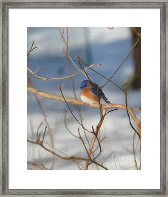 Framed Print featuring the painting Winter Bluebird Art by Smilin Eyes  Treasures