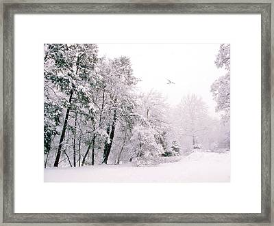 Winter White Framed Print by Jessica Jenney